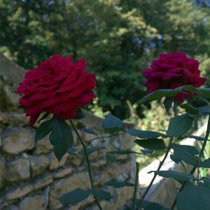 rose jardin bnb