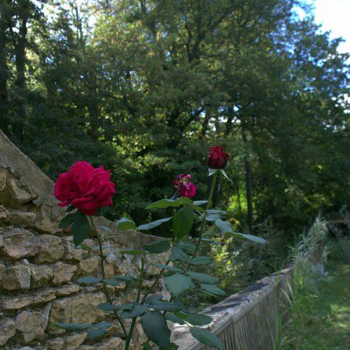 jardin maison hotes